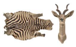 Kudu Mount and Zebra Skin